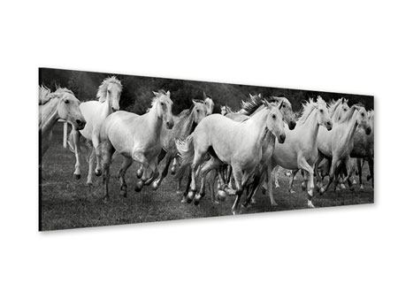 Panoramic Acrylic Print The Mustang Herd