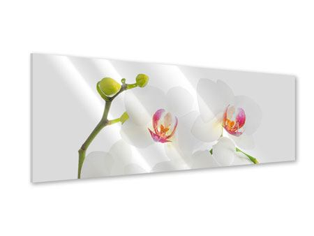 Panoramic Acrylic Print Orchids Love