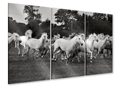 3 Piece Acrylic Print The Mustang Herd