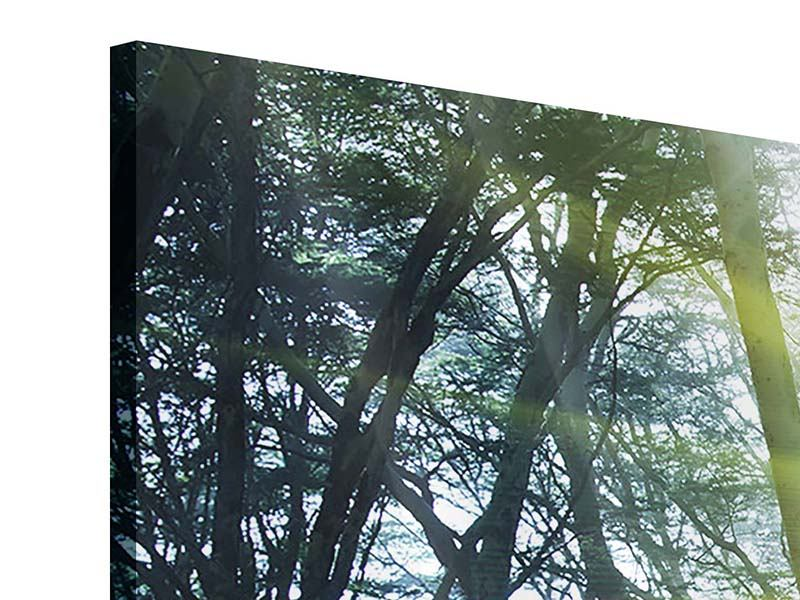 3 Piece Acrylic Print Sunbeams In The Forest