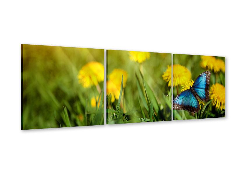 Panoramic 3 Piece Acrylic Print Dandelion And Butterfly