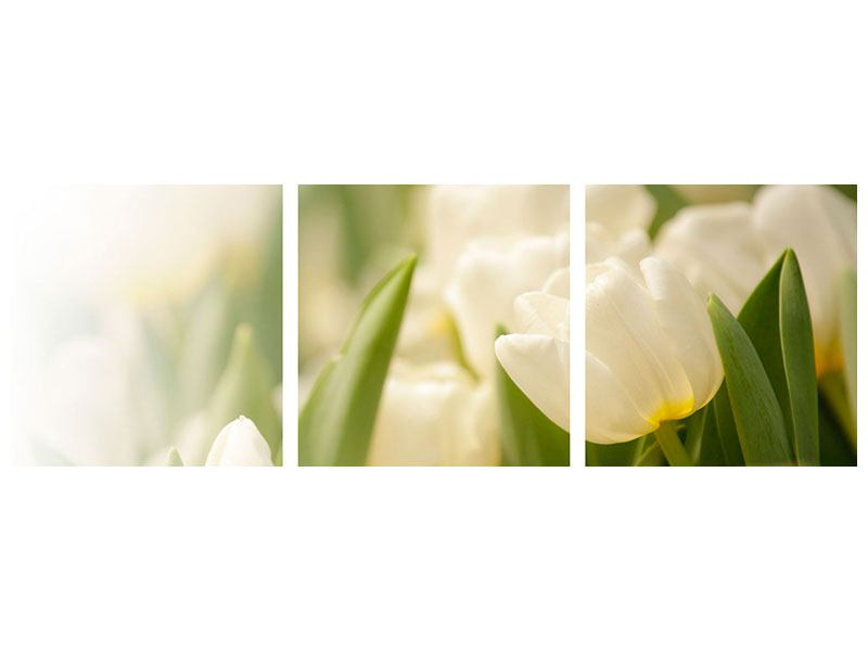 Panoramic 3 Piece Acrylic Print Tulips Perspective
