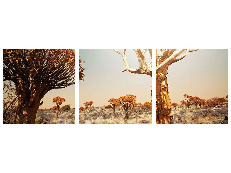 Panoramic 3 Piece Acrylic Print African Landscape