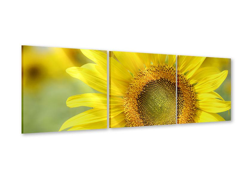 Panoramic 3 Piece Acrylic Print The Flower Of The Sun