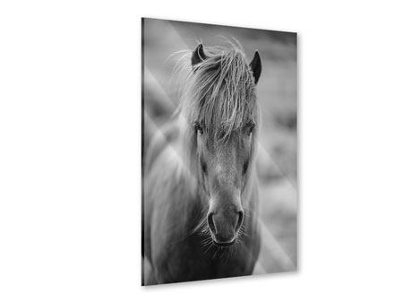 Acrylic Print Horse Being At The Corridor