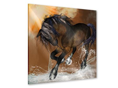 Acrylic Print Black Beauty
