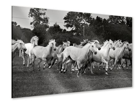 Acrylic Print The Mustang Herd