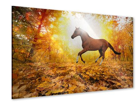 Acrylic Print Whole Blood In Autumn Forest