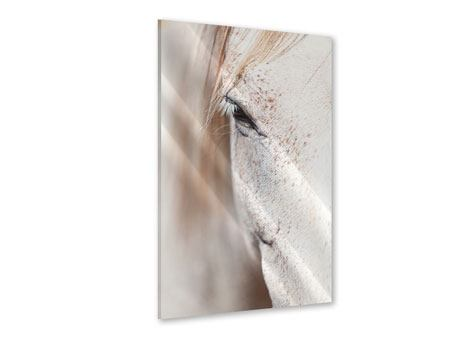 Acrylic Print Whole Blood White Horses