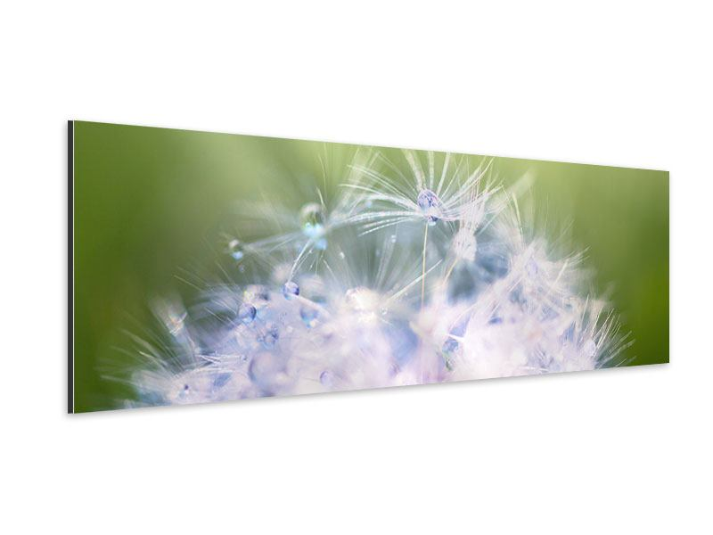 Panoramic Aluminium Print Dandelion XL In Morning Dew