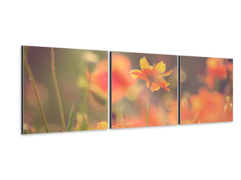 Panoramic 3 Piece Aluminium Print Flowerage