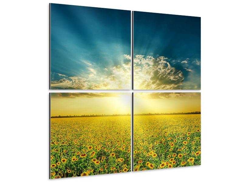 4 Piece Aluminium Print Sunflowers In The Evening Sun