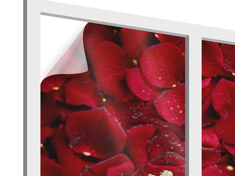 Window Print Bed Of Roses