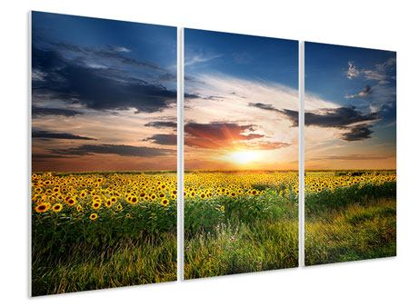 3 Piece Forex Print A Field Of Sunflowers
