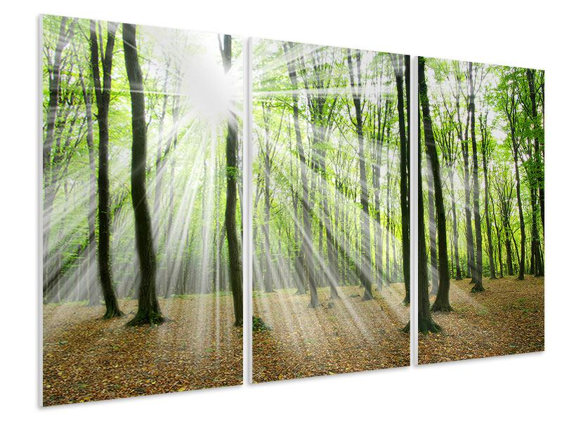 3 Piece Forex Print Magic Light In The Trees
