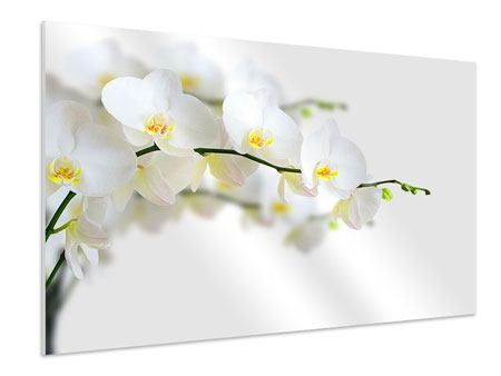 Forex Print White Orchids
