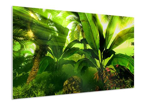 Forex Print Sunrise In The Rainforest