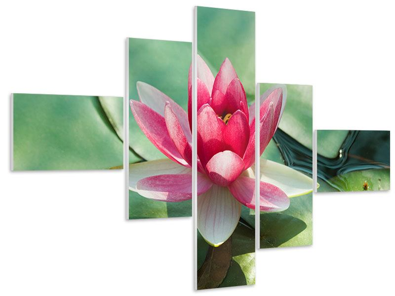 Modern 5 Piece Forex Print The Frog And The Lotus Leaf