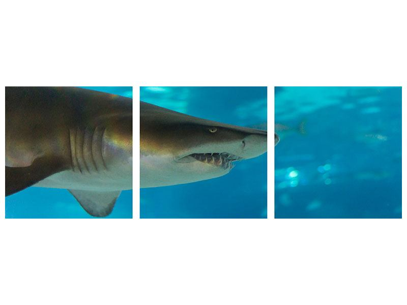 Posters adhesif en 3 parties Panoramique Le requin