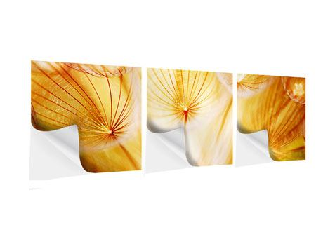 Panoramic 3 Piece Self-Adhesive Poster Close Up Dandelion In Light
