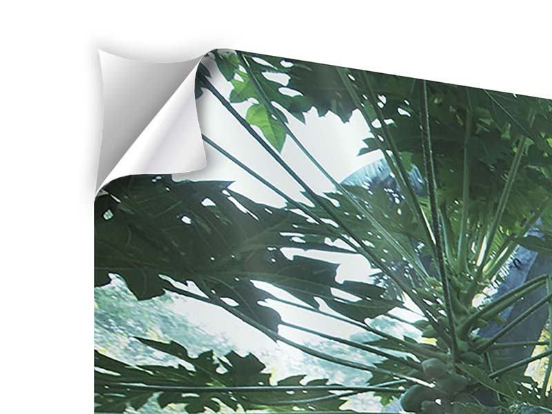 Modern 4 Piece Self-Adhesive Poster Jungle Star