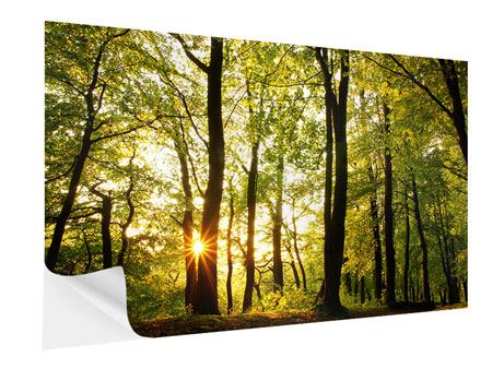 Self-Adhesive Poster Sunset Between Trees