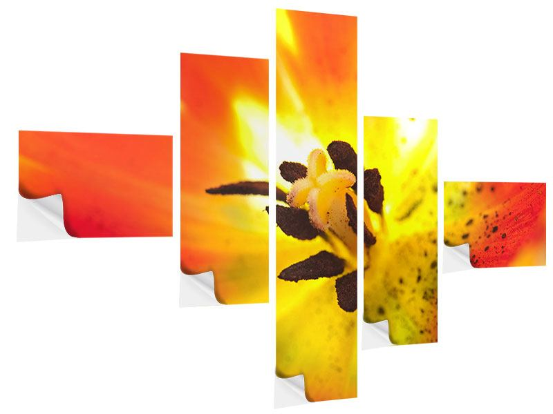 Modern 5 Piece Self-Adhesive Poster The Scar Of A Tulip XXL