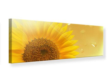 Panoramic Canvas Print Sunflower in Morning dew