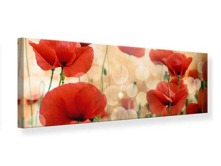 Panoramic Canvas Print The Poppy