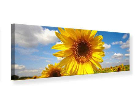 Panoramic Canvas Print Field Of Sunflowers