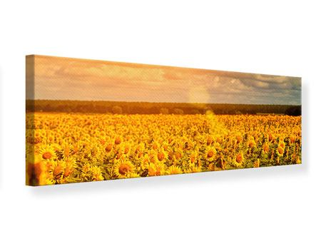 Panoramic Canvas Print Golden Light Sunflower