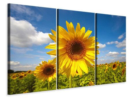 3 Piece Canvas Print Field Of Sunflowers