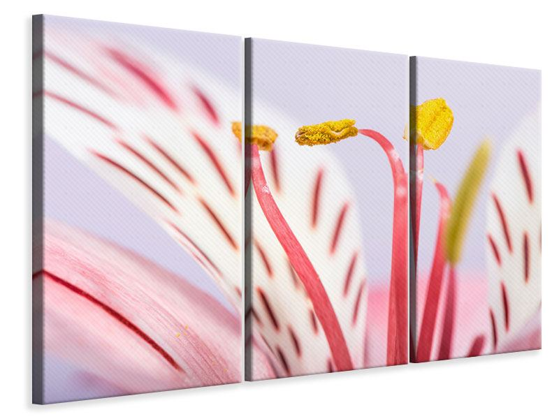 3 Piece Canvas Print Close Up Exotic Beauty