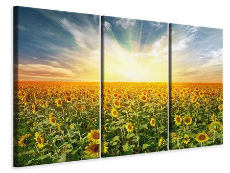 3 Piece Canvas Print A Field Full Of Sunflowers