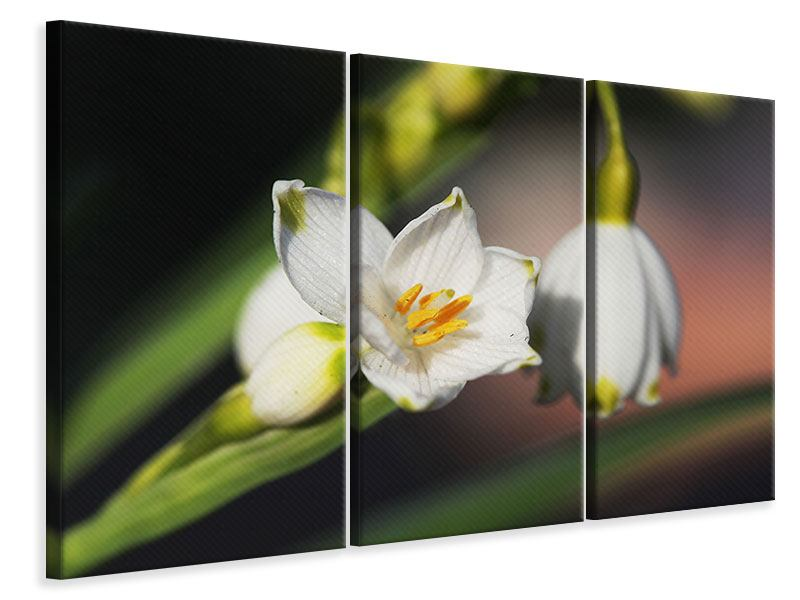 3 Piece Canvas Print Snowdrops XXL