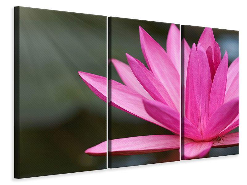 3 Piece Canvas Print XXL Lily In Pink