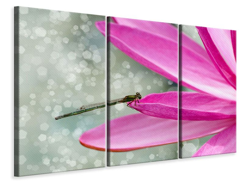3 Piece Canvas Print Dragonfly On The Lily Pad