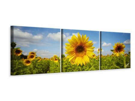 Panoramic 3 Piece Canvas Print Summer Sunflowers