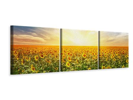 Panoramic 3 Piece Canvas Print A Field Full Of Sunflowers