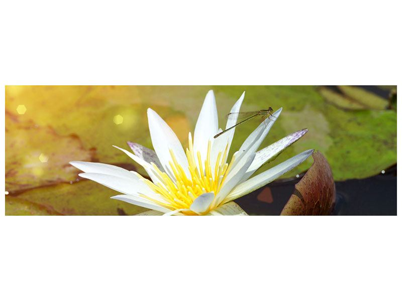Panoramic Metallic Print Waterlily