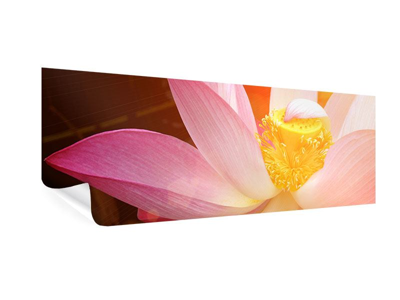 Panoramic Poster Close Up Lotus