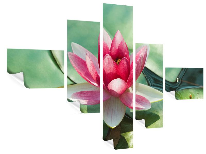 Modern 5 Piece Poster The Frog And The Lotus Leaf